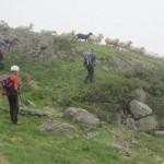 IMG_2188-carneros cerca lago Aure